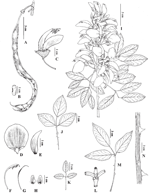 El género Erythrina (Leguminosae) en Argentina