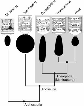 Resultado de imagen de huevos teropodo