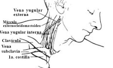 El hospital regional novosibirsk la cirugía vascular
