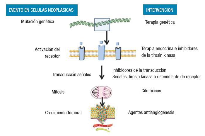 esteroidogenesis slideshare