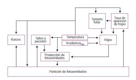 Técnicas de análisis de crecimiento de plantas: su aplicación a ...